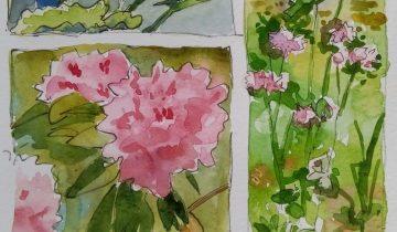 Dans 3 encadrés: arums, dahlias nains et rhododendrons.
